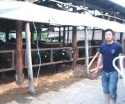 親戚の家は酪農をしています。牛を怒らせると、泥をかけられてしまいます。