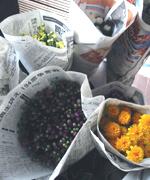 仏花です。菊のスッキリとした香りが好きです。お彼岸の花にはリンドウなどを入れて。