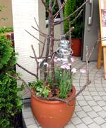 玄関前には、枯れ枝をオブジェにした寄せ植えを。キャンドルランタンがかかっています。