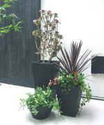 玄関前には個性的な植物の寄せ植えを。黒いシンプルな鉢が、植物をより引き立てます。