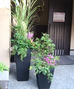 ススキや友禅菊、ノボタンなどを入れた秋の寄せ植え。和風の家に合わせて作りました。(流山住宅展示場にて)