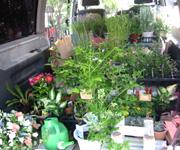 ワンボックスに、たくさんの花を積んで出発。 急ブレーキでも倒れない工夫がしてあります。