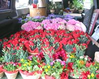 花達は、箱に入って出荷を待ちます。埼玉県三郷市から、全国のお母さんのところへいってらっしゃい!