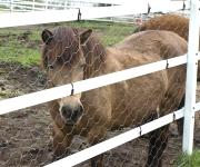 大笹牧場にて。優しい顔立ちのお馬さん。