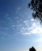 公園で寝転がって撮影した秋の空。