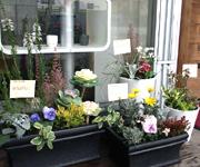 スターディスタイルのショップ風景です。戸外用の寄せ植えも販売しています。