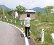 高原の散歩は格別でした。