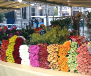 パリでは広場でよく市場(マルシェ)を見かけます。食べ物に紛れて花も比較的安く売られています。