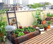 After:広い屋上では、収穫した野菜を使ってバーベキューも楽しめます。収穫時期が今から楽しみです。