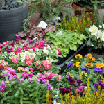 車に花を積み込んで冬の庭仕事。土が凍っていて困ることも。