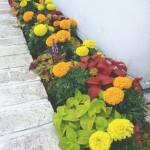 メンテンスさせて頂いている花壇も夏の姿に変わりました。