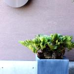 店舗の植物ディスプレイも行っています。