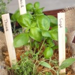 小さな鉢に寄せ植えにしておくと管理も簡単です。
