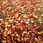 秋はとても綺麗な季節。