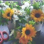毎週、歯医者さんにお届けしている花。既にヒマワリの季節です。