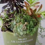 ご注文を頂いて制作した寄せ植え。アボカド色の鉢がお気に入り。