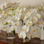 ウエディング装花で使用した、たっぷりの胡蝶蘭。