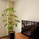 室内の観葉植物などのコーディネートも承っています。