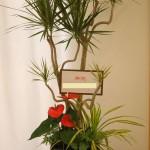観葉植物の寄せ植えのオーダーもお受けしています。
