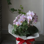 品のあるミディファレノ。室内に飾るお花をご指定の方へ。
